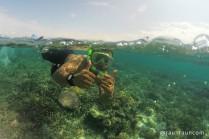 Snorkeling around Kanawa Island