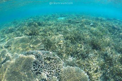 Underwater of Pink Beach